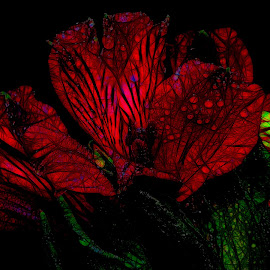 Red Flowers by Dave Walters - Digital Art Abstract ( flowers, lumix fz2500, colors, digital art )