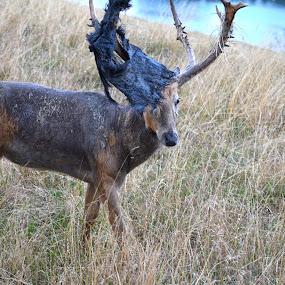 Antler Tarp by Sean Miller - Animals Other Mammals
