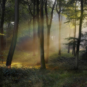 Woodland Rainbox by Ceri Jones - Landscapes Forests ( trees, woods, mist )