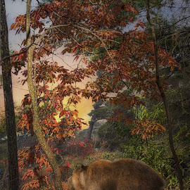 by Bruce Cramer - Digital Art Animals