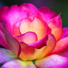 Flower 854 by Raphael RaCcoon - Flowers Single Flower