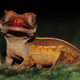 :P by Abbey Gatto - Animals Reptiles