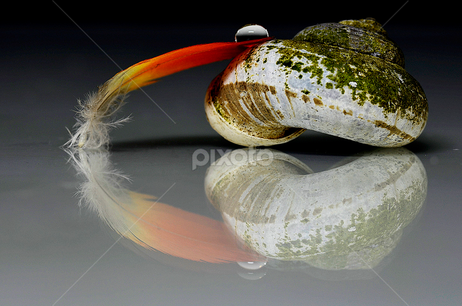 come steady... by Pete G. Flores - Artistic Objects Still Life ( shell, autofocus, avian, drop, oranges, pwcstilllife, otep, feather )