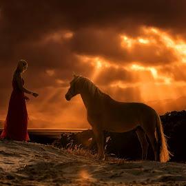fairy tale by 'Monique Smit - Digital Art Animals ( girl, horse, sundown )