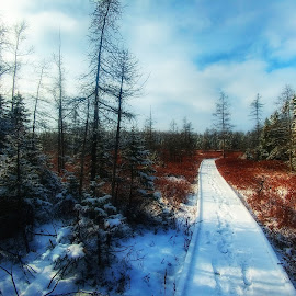 Sifton bog boardwalk by Peter Krahn - Landscapes Prairies, Meadows & Fields ( boardwalk bog bush forest snow )