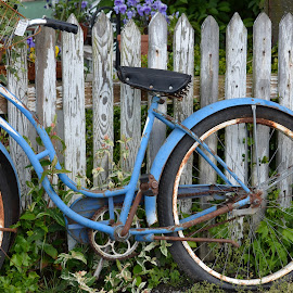 This Old Bike by Diana Feaster - Transportation Bicycles ( picket fence, shabby chic, blue bike,  )