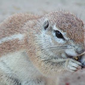 by Gerrit vd Merwe - Novices Only Wildlife