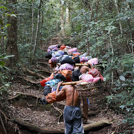 Mountain Guides on the trek up Mount Rinjani, Indonesia by Kyle Durant - People Street & Candids ( guide, mount rinjani, volcano, jungle, indonesia, path, forest, guides )