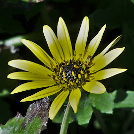 Yellow Flower by Sarah Harding - Novices Only Flowers & Plants ( plant, nature, outdoors, novices only, flower )