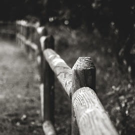 Nature Is Out of Focus by Rob Heber - Black & White Objects & Still Life ( countryside, natural light, detail, sepia, monochrome, wood, black and white, plants, sepia toned, leaves, landscape, rustic, shallow depth of field, nature, pole, secluded, no people, fence post, country life, closeup, wood grain, fence line, woodlands, logs, grass, texture, vanishing perspective, forest, scenic, beauty in nature, plant life, poles, woods, close up, fence, outdoors, wooden fence, selective focus, trees, rural scene, growth, wooded area )