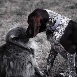 Best Friends by Kezia Wise - Animals - Dogs Puppies ( cat, animals, puppy )