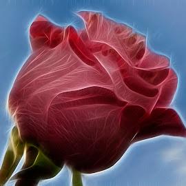 fractal rose by LADOCKi Elvira - Digital Art Things ( flowers )