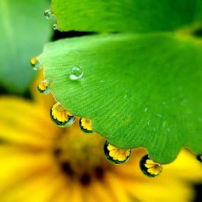 Yellow Flower by Adnan Hidayat Prihastomo - Instagram & Mobile Other ( water, grass, droplet, dew, green, flower )