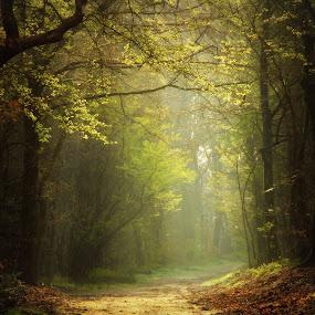 Green forest by Hilda van der Lee - Landscapes Forests ( nature, green, forest, sunlight, spring,  )