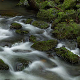 Muir Creek by George Nichols - Nature Up Close Water