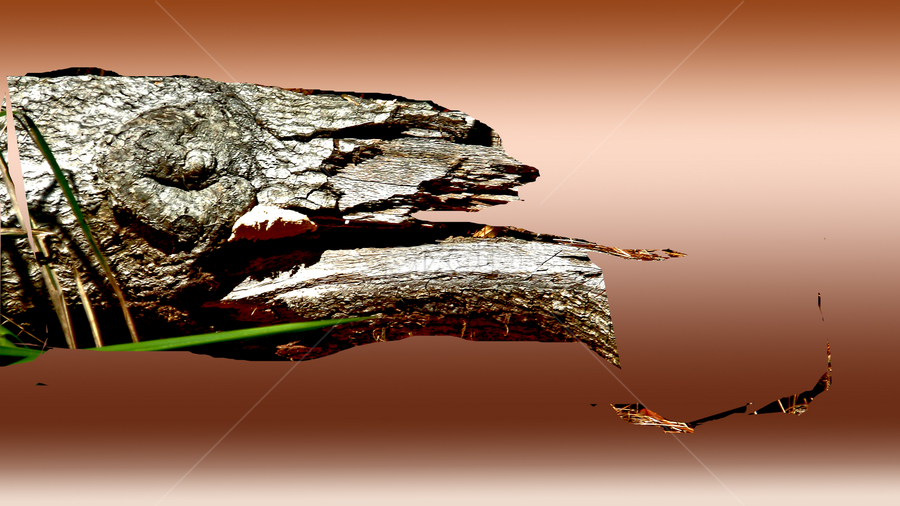 alligatorlog by Edward Gold - Digital Art Things ( hunting fish.rust backgrown, shaped log, rust color water, alligatorshaped, bright color )