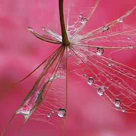 Pokusaj ( prvi  put ) :) by Irena Trkulja - Nature Up Close Other plants