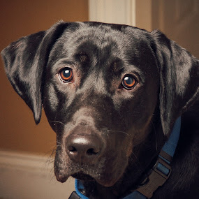Finn by Lee Wimberly - Animals - Dogs Portraits