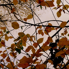 Autumn leaves by Perla Tortosa - Nature Up Close Leaves & Grasses ( sky, nature, autumn, leaves )