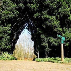 Archway Green by DJ Cockburn - City,  Street & Park  City Parks ( hedge, england, arch, coin stamp, path, bush, odney, cookham, berkshire, pavement )