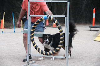 Heathcote Junction Pet groomer