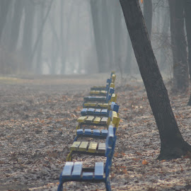 Benches by Georgi Tsachev - City,  Street & Park  City Parks ( benches, fog, autumn, colors, outdoor, leaves, city park, city )