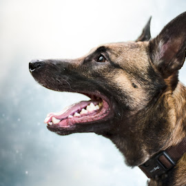 Wintertime. by Wilma Heuvel - Animals - Dogs Portraits