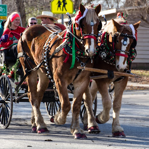 lawrence horse drawn parade 24.jpg