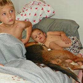 Sleepy Morning by Sandy Stevens Krassinger - Babies & Children Children Candids ( bed, boys, children, beagle, dog, pillows )