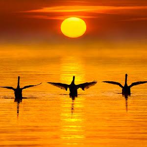 Sun Worshipers.jpg