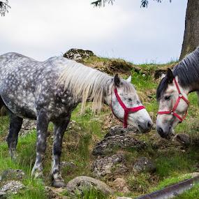 Love by Jean Bogdan Dumitru - Novices Only Pets ( love, horses )
