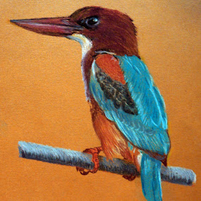 White Throated Kingfisher by Jasna Dragun - Painting All Painting ( bird, pastel, painting )