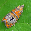 Arched Marble Moth