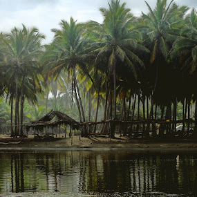 Lake  and palms by Cristobal Garciaferro Rubio - Nature Up Close Trees & Bushes