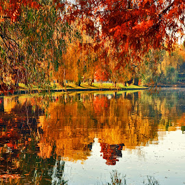 Autumn Natural Mirror by Gabriela Alina  Homutescu - Nature Up Close Water ( calm, countryside, orange, reflection, park, colorful, green, forest, lake, yellow, leaves, landscape, country, red, tree, nature, autumn, color, foliage, fall, trembled, colored )