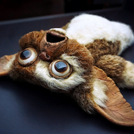 Don't feed after midnight by Todd Reynolds - Artistic Objects Toys