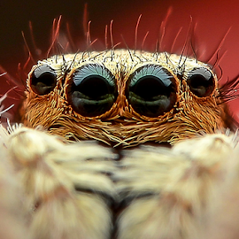 See me smile? by Dave Lerio - Animals Insects & Spiders