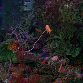 Great Barrier Reef by Sarah Harding - Novices Only Flowers & Plants ( plant, underwater, novices only, wildlife, sea )