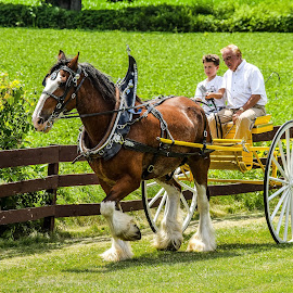 Grandpa teaching grandson the reigns by Jason Lockhart - Animals Horses ( wisconsin, larson's clydesdales, carriage, horese, clydesdale, ripon )