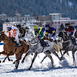 White Turf by Saubhik  Doloi - Sports & Fitness Snow Sports ( speed, snow, horse, white, race )