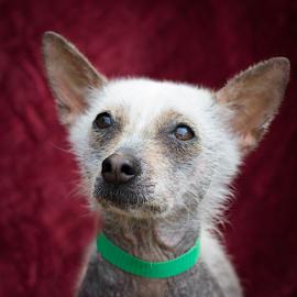 Jillian by Myra Brizendine Wilson - Animals - Dogs Portraits ( canine, pet, dog, jillian )