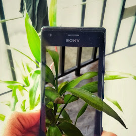 3D plants by Debayan Majumder - Nature Up Close Other plants