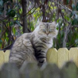 Artsy Kitty (oil paint effect) by Alycia Marshall-Steen - Animals - Cats Portraits