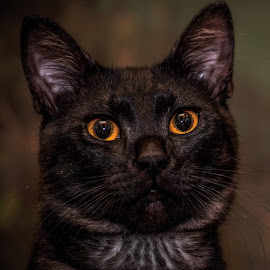 Alf's eyes by Mihai Nita - Animals - Cats Portraits ( mostaches, cat, tomcat, closeup, eyes,  )