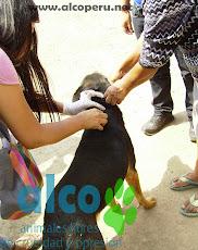 Campaña de asistencia en Mangomarca SJL (24)