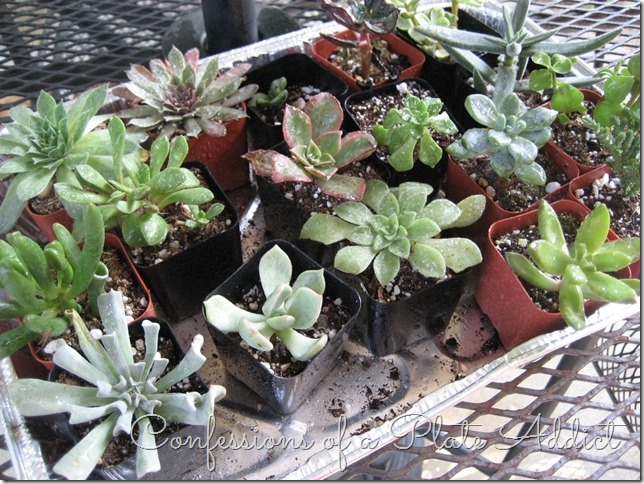 CONFESSIONS OF A PLATE ADDICT Fixer Upper Inspired Farmhouse Centerpiece succulents