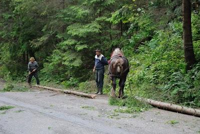Waldarbeiter auf dem Weg zum Curmatura Pass