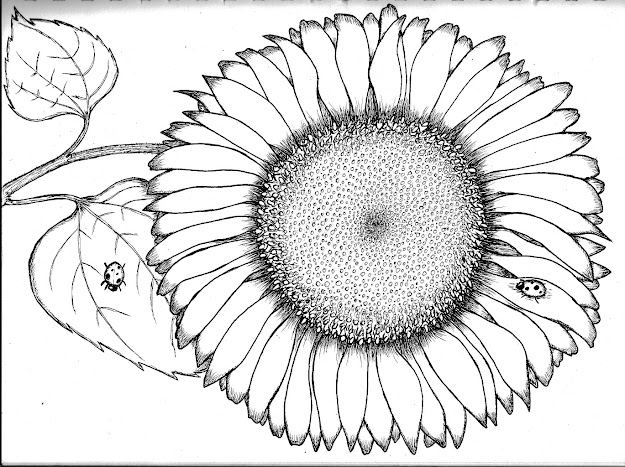 Free Coloring Pages Of To Draw Sunflower