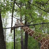 Zoo Snooze 2015 - IMG_7264.JPG