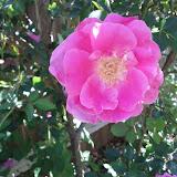 Gardening 2013 - IMG_20130413_110550.jpg